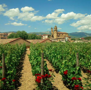 Elciego and Rioja Vineyards