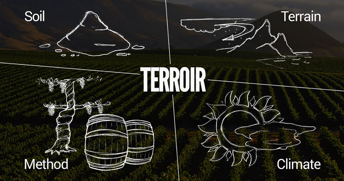 Terroir Process of Grapes into Wine  | Just Wine
