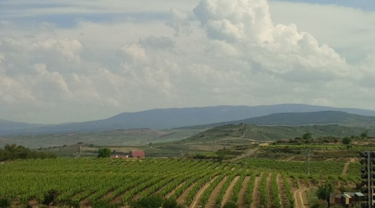 Revelling in Rioja: Grape Varieties, Sub Regions and the Wines of Rioja, Spain | Just Wine