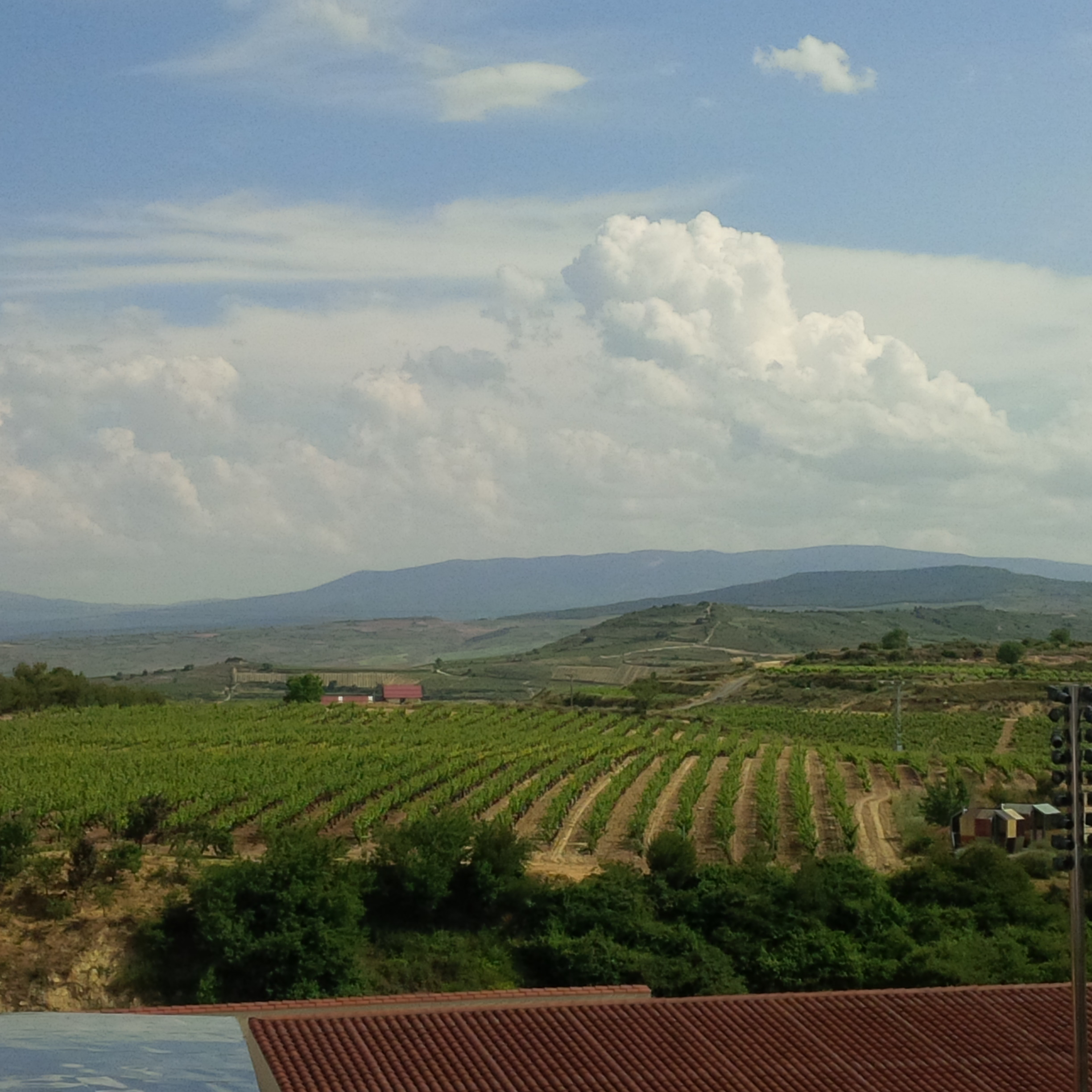 Rioja Vineyards  | Just Wine