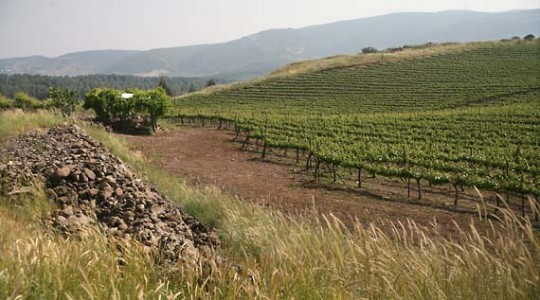 Everything You Need To Know About Wines of Israel: History, Grapes & Wine Regions | Just Wine