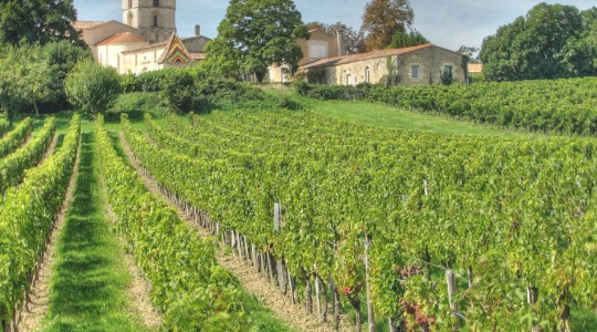 Basics of French Wine: Bordeaux for Beginners | Just Wine