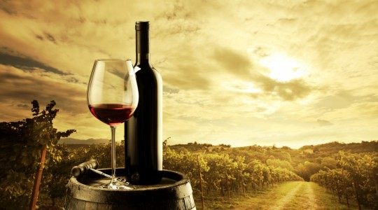 Oh How Noble! The Most Important International Grape Varieties | Just Wine