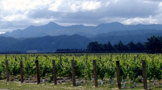 A Little Tribute to Marlborough, New Zealand's Sauvignon Blanc | Just Wine