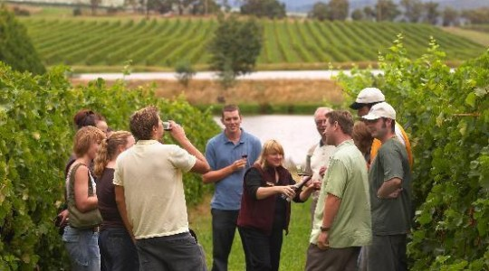 Great Tips on How To Plan The Ultimate Wine Tasting Trip   Just Wine
