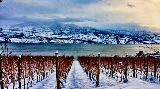 Canada Has the Climate for World Class Icewine | Just Wine