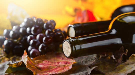 Celebrate National Cabernet Day With Everything You Need to Know About Cabernet | Just Wine
