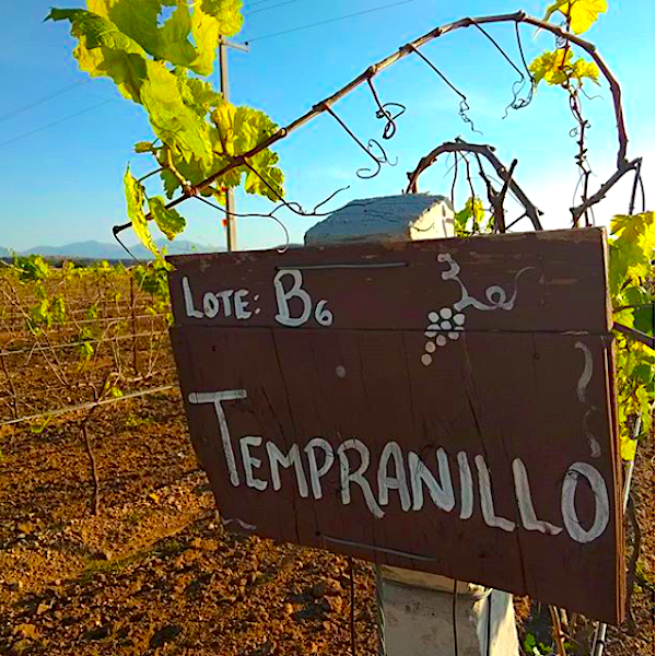 tempranillo vineyard in Mexico, Mexican wine industry
