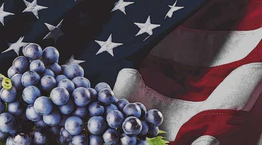 Uniquely American Wines: Indigenous Grape Varietals of the United States | Just Wine