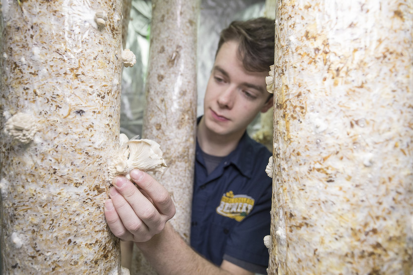 Olds College enviro-prodigy is growing mushrooms from beer waste
