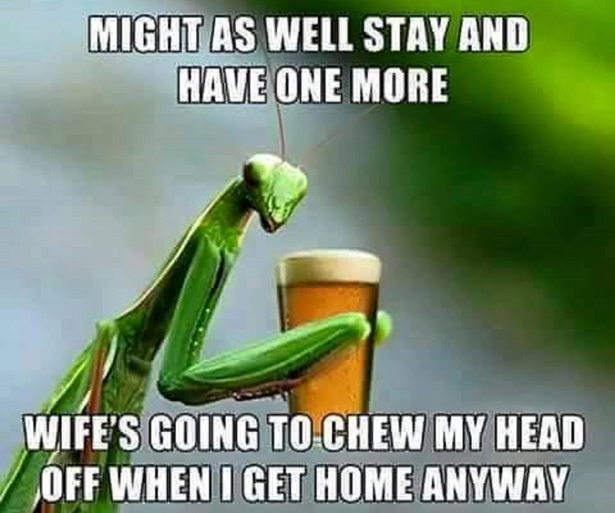 The Life of a Beer Mantis Meme