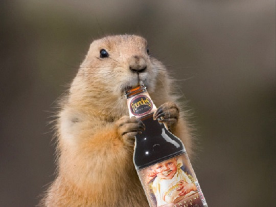 Founders Groundhog