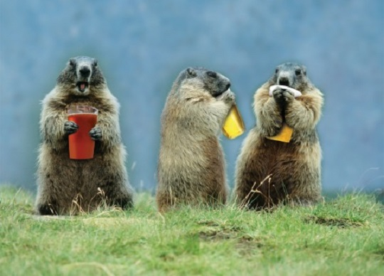 Groundhog Beer Buddies