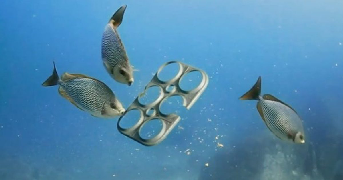 SaltWater Brewery Creates Edible Six Pack Rings