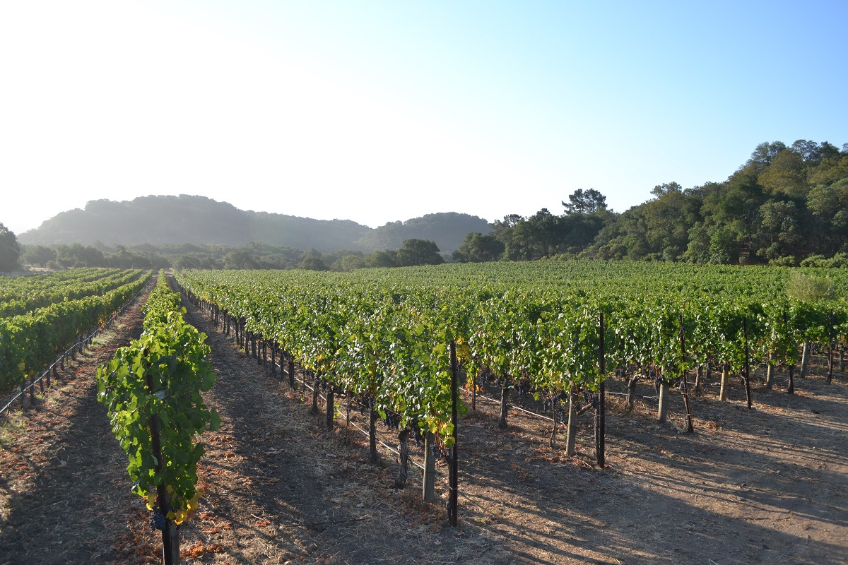 Image by: Sill Vineyards  | Just Wine