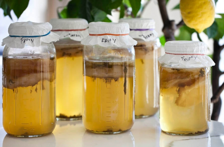 home-brew-kombucha-recipe-how-to-yeast-bacteria