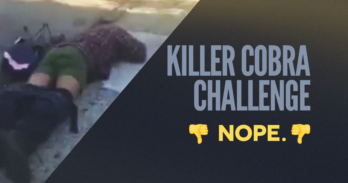 The Killer Cobra Beer Challenge