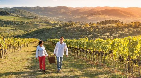 5 Reasons Why You Should Visit the Wineries in Napa Valley, California | Just Wine