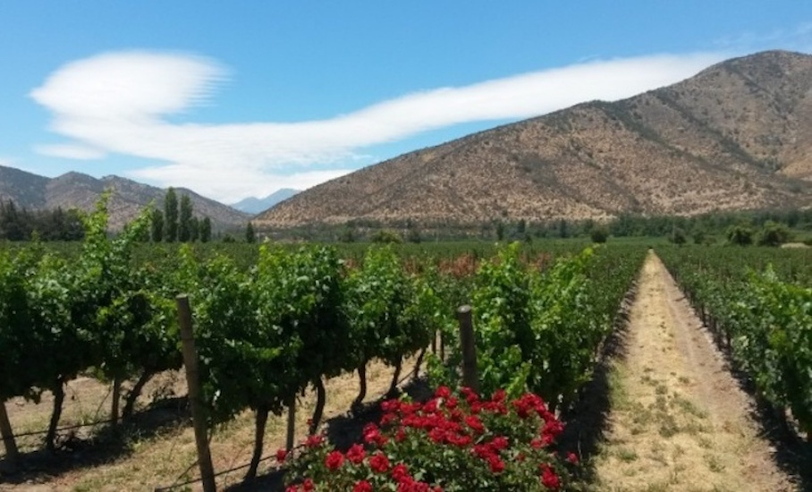 chile-wine-producing-countries-old-world-new-world-wine-regions-just-wine