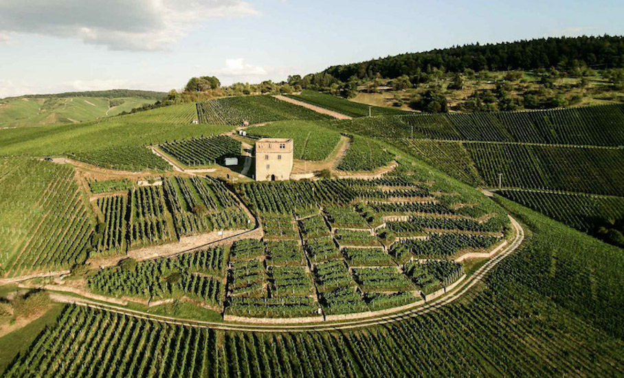 germany-wine-producing-countries-old-world-new-world-wine-regions-just-wine