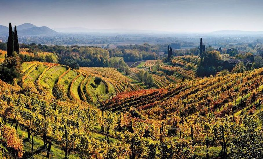 italy-wine-producing-countries-old-world-new-world-wine-regions-just-wine