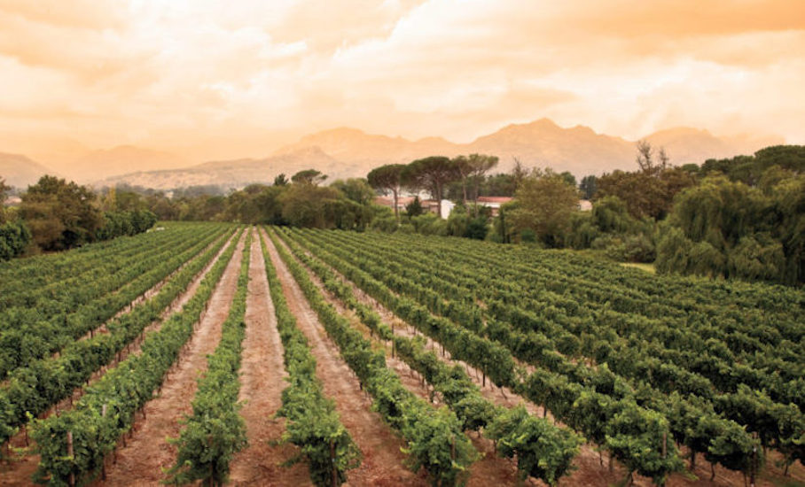 south-africa-wine-producing-countries-old-world-new-world-wine-regions-just-wine