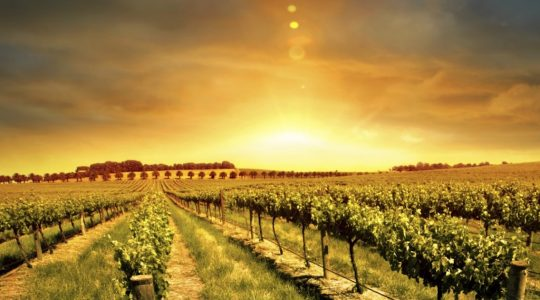 Top 10 Wine Producing Countries & Regions: Old World and New World | Just Wine