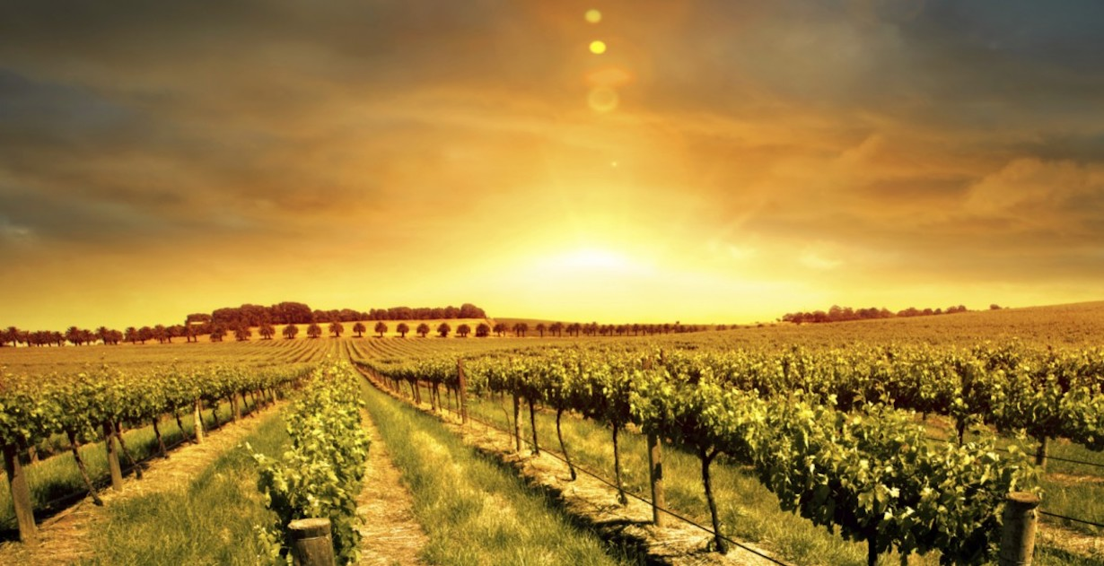 Top 10 Wine Producing Countries & Regions: Old World and New World |
