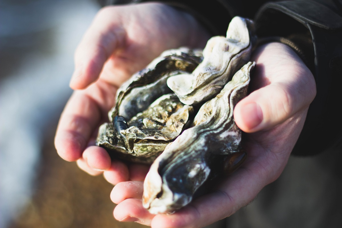 Does Oyster Stout Have Real Oysters?