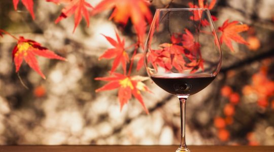 6 Fascinating Wines Perfect for Fall | Just Wine