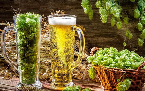 Beer, Hops and Wheat