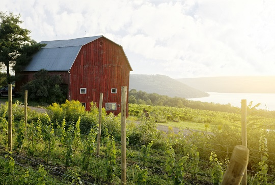CHASING DELICIOUS IN THE FINGER LAKES