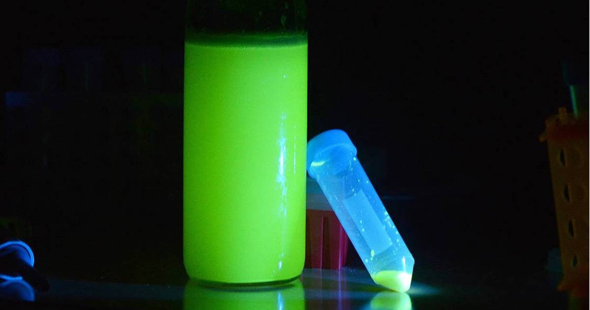 How to Brew Glow-in-the-Dark Beer
