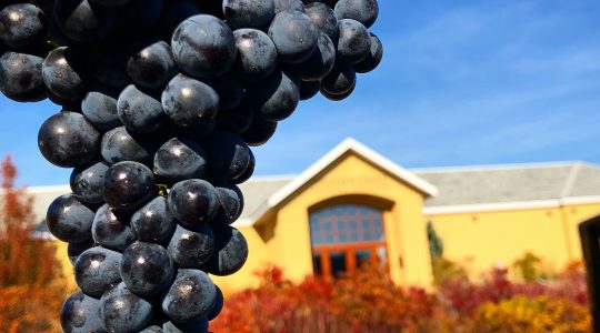 How Wine is Made — 6 Steps from Grape Harvest to Maturation | Just Wine