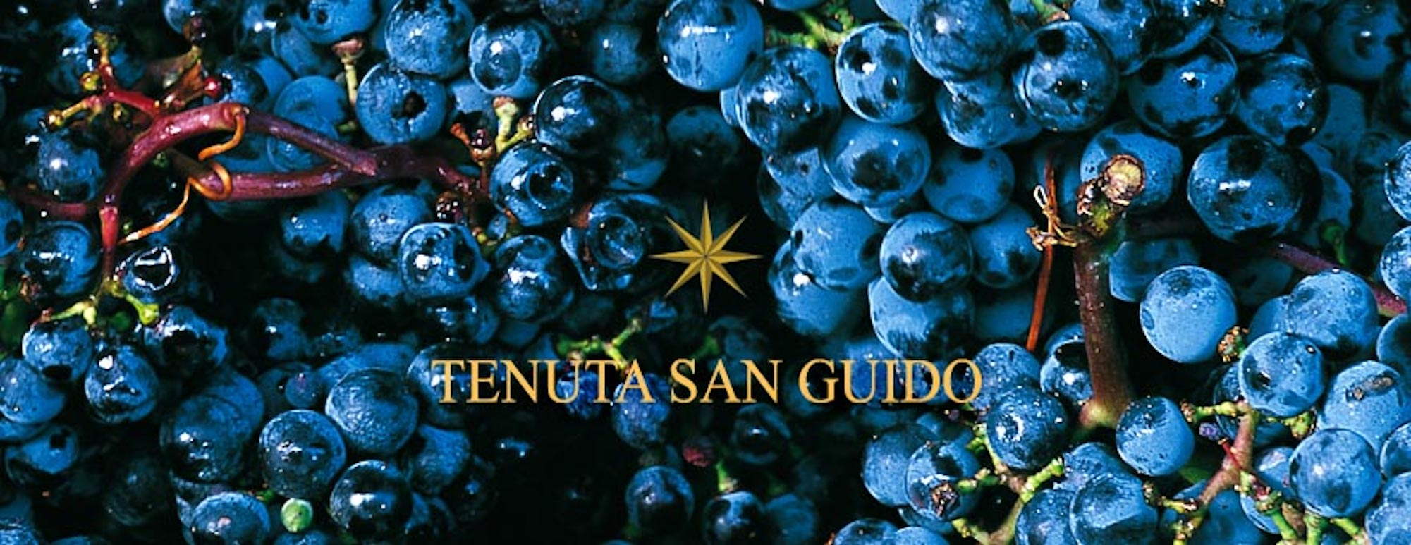 Sassicaia in #1 on Wine Spectator's Top 100 List