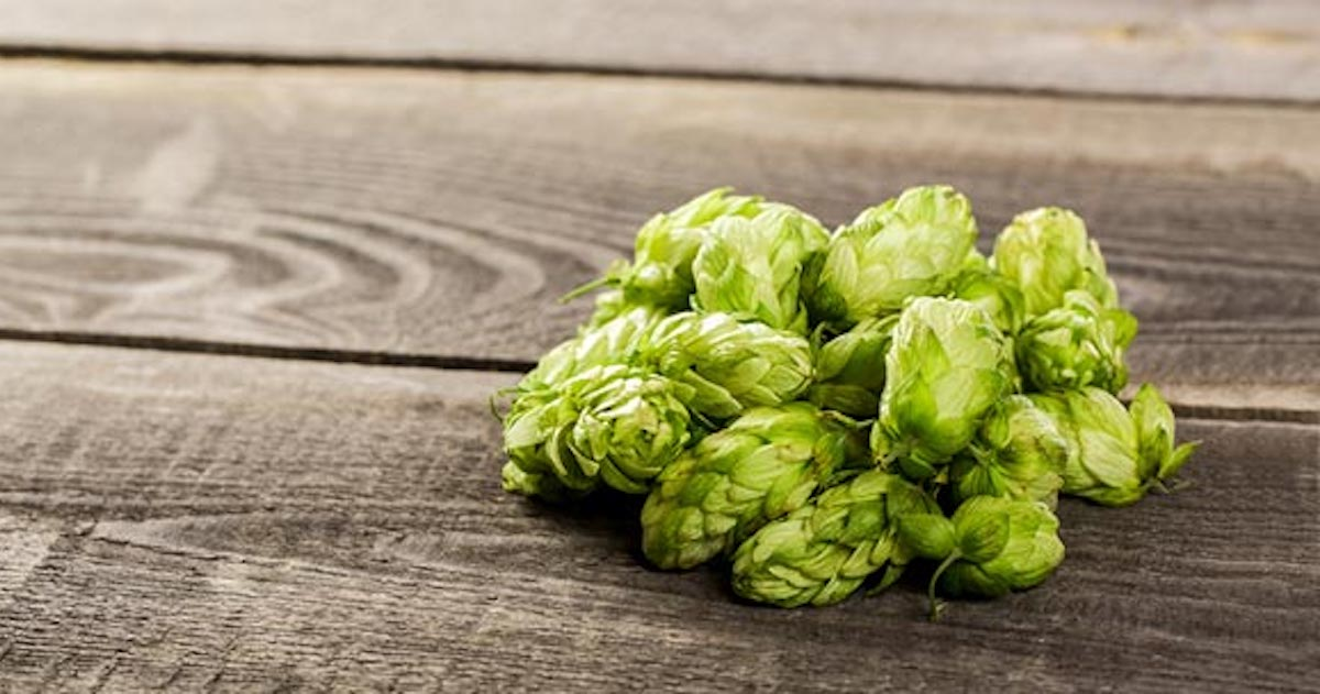 6 of the Hoppiest Beers Ever Brewed