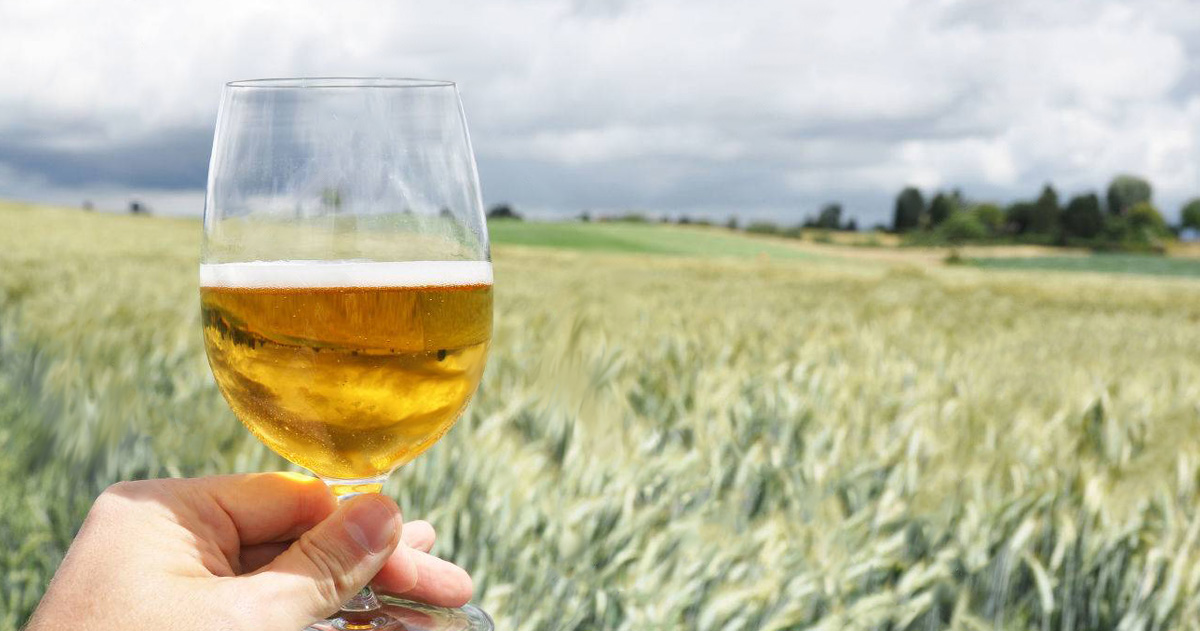 Beer Styles 201: What is a Saison / Farmhouse Ale?