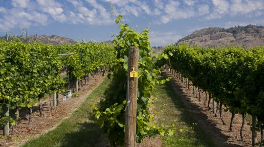 Why You Need to Visit the Unique Oliver & Osoyoos Wine Region in British Columbia | Just Wine