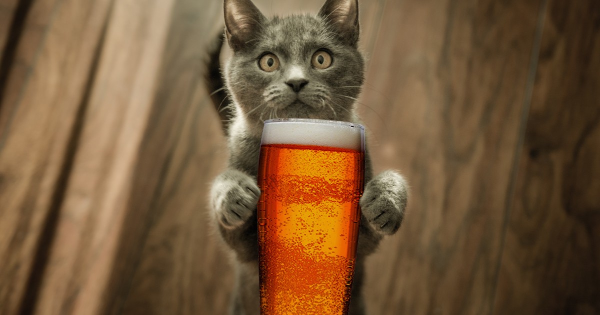 10 Purr-fect Beers for the Cat Lover